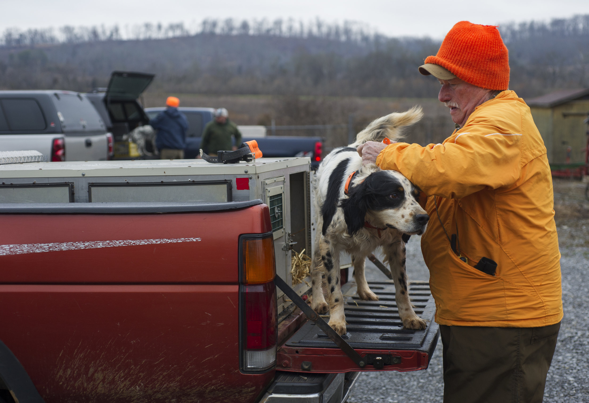 Glenn Palmer puts a collar on his English Setter as they prepare to hunt for quail coveys during a quail census conducted by the the Tennessee Wildlife Resource Agency using bird dogs at Kiker Bottoms Tuesday, Feb. 10, 2015.