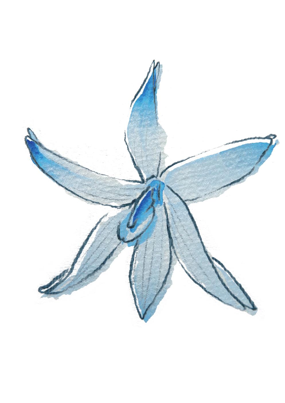 蘭花-08.jpg