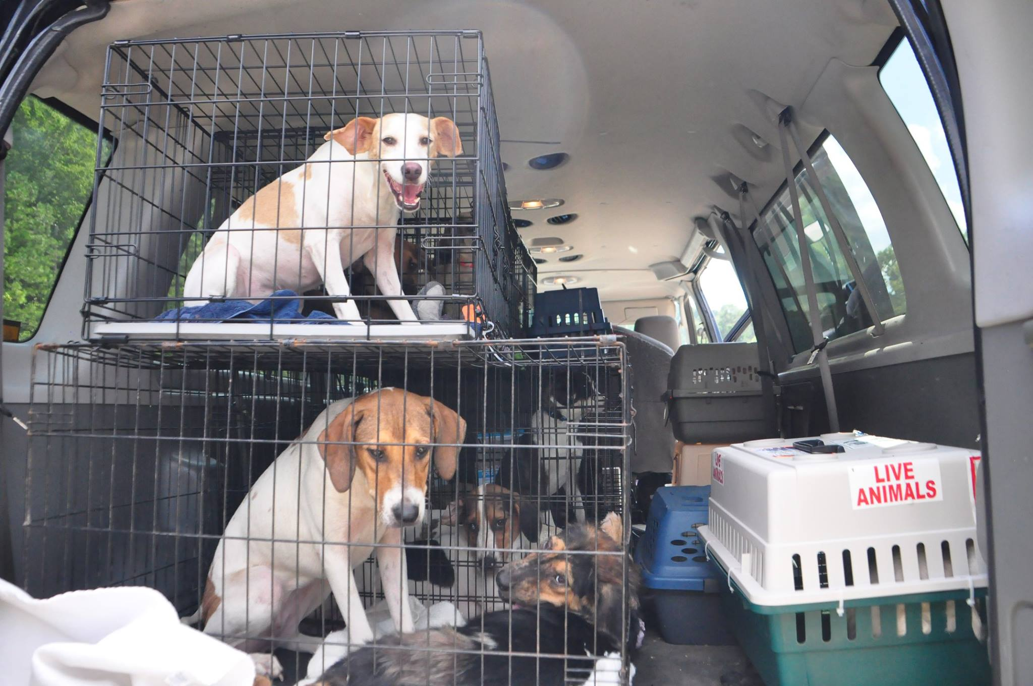 More Rescue Dogs from Hurricane Harvey Animal Rescue.jpg