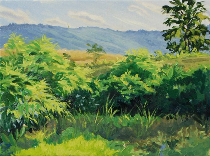 """""""Pond-Side Plants, Summer Evening"""" Oil on canvas 12"""" x 16"""""""