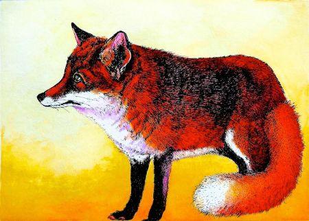 Fox Waiting.jpg
