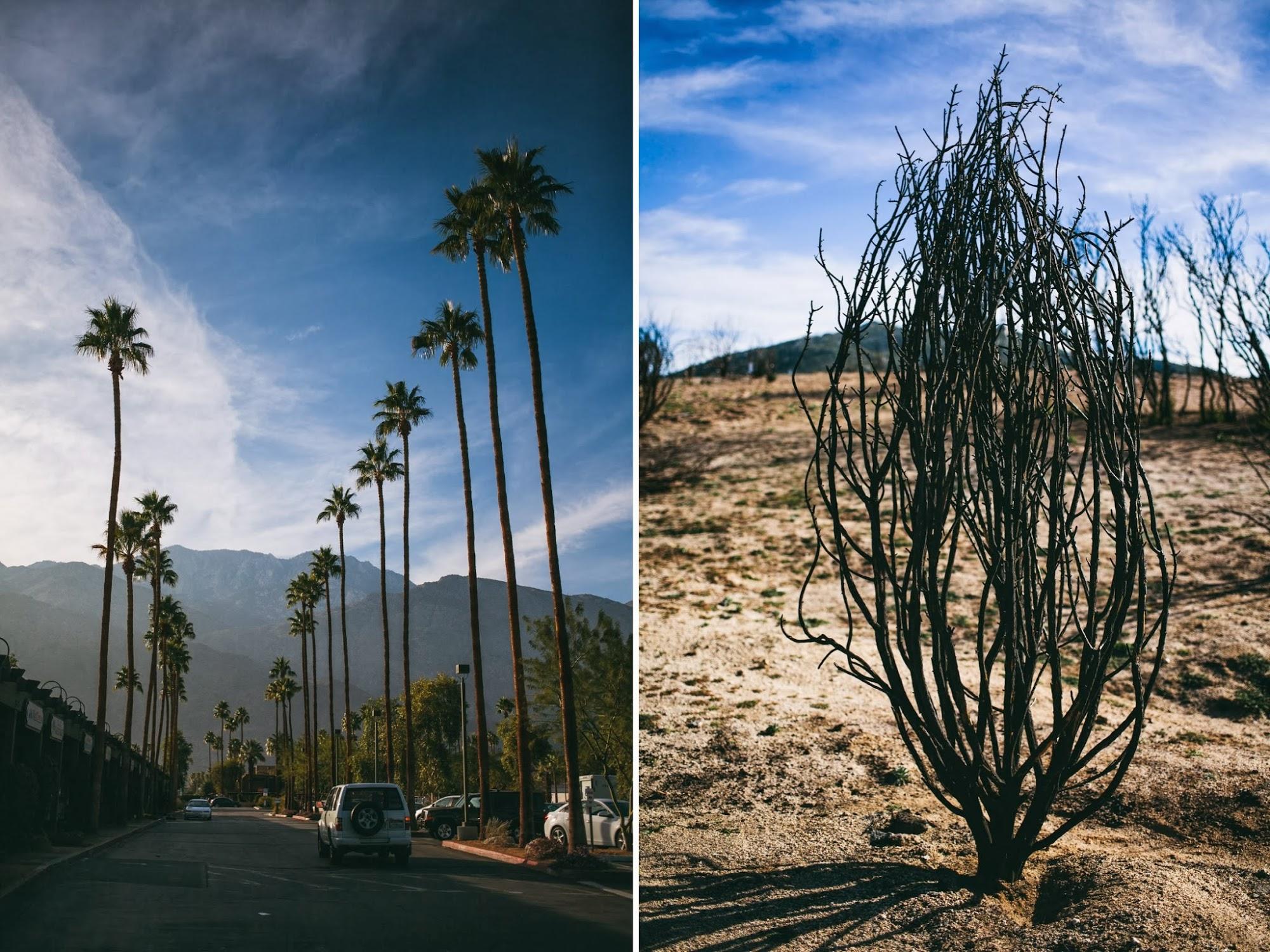 palm+springs.jpg