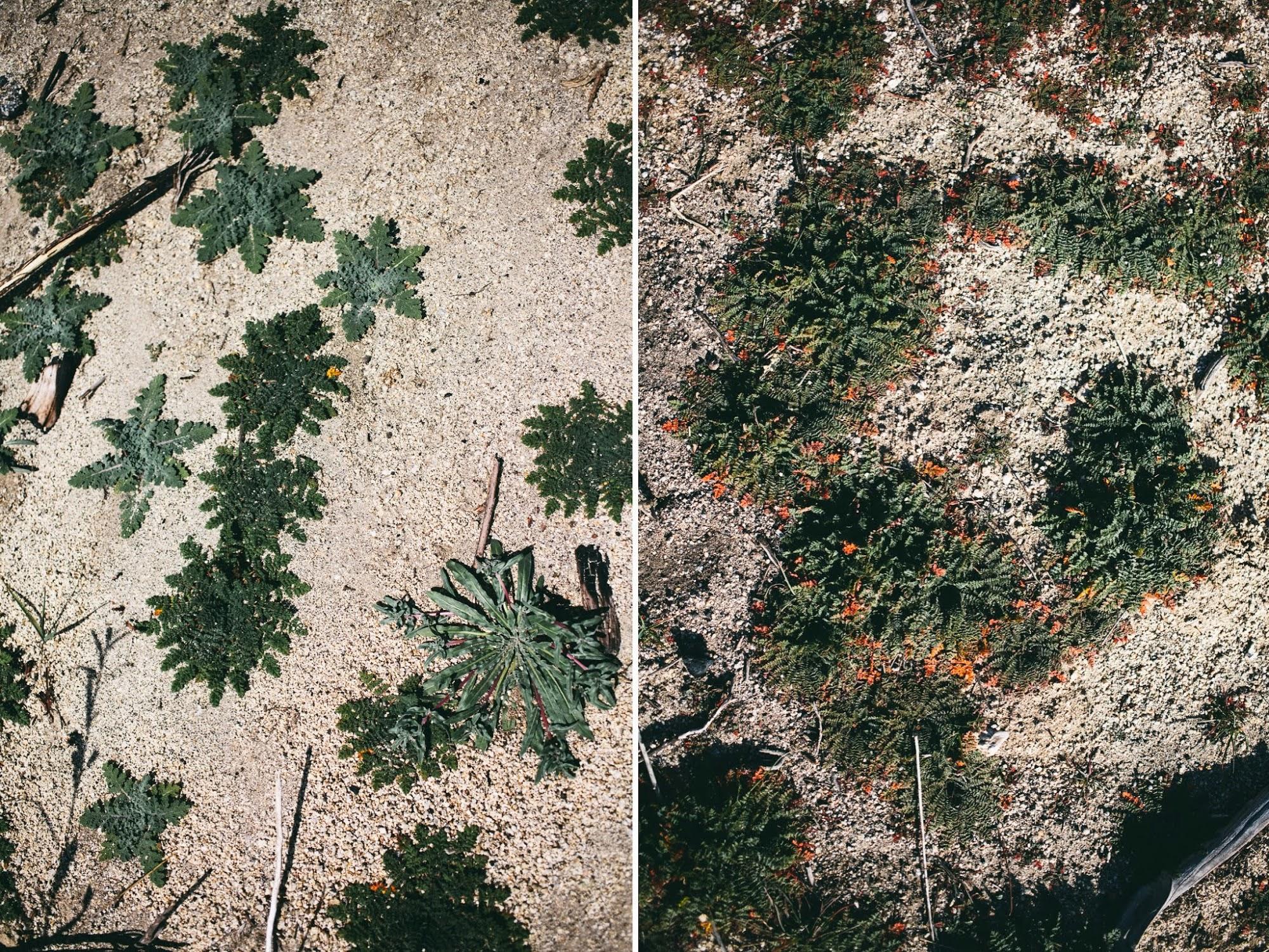desert+patterns.jpg