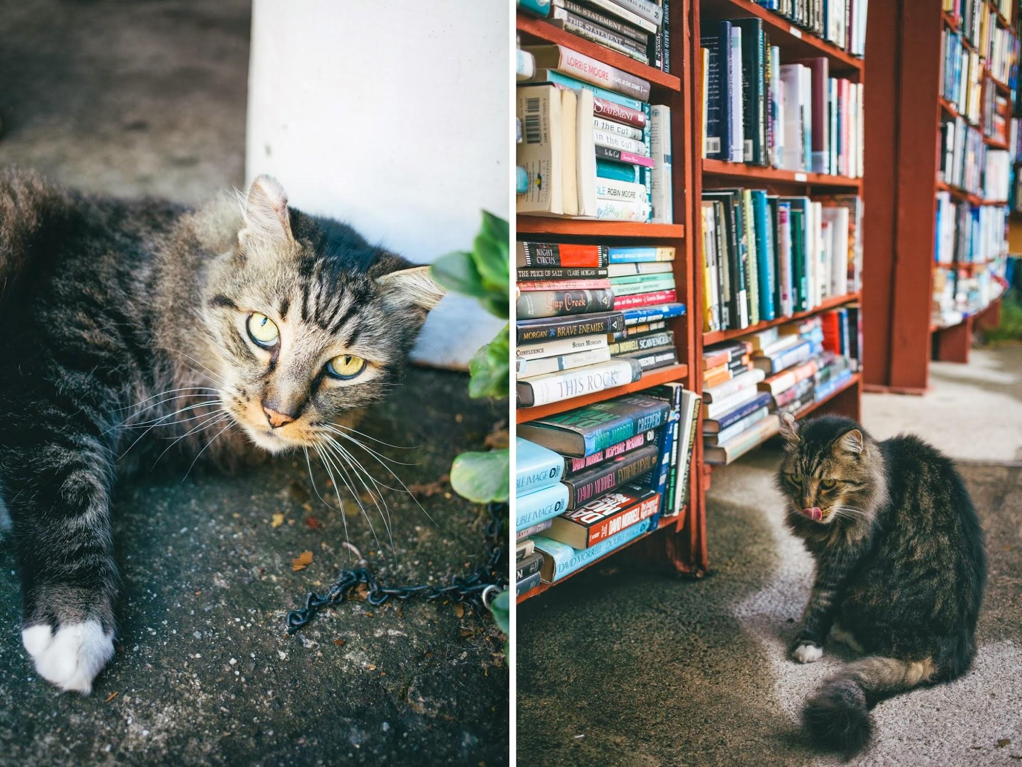 barts+books+ojai+cat.jpg