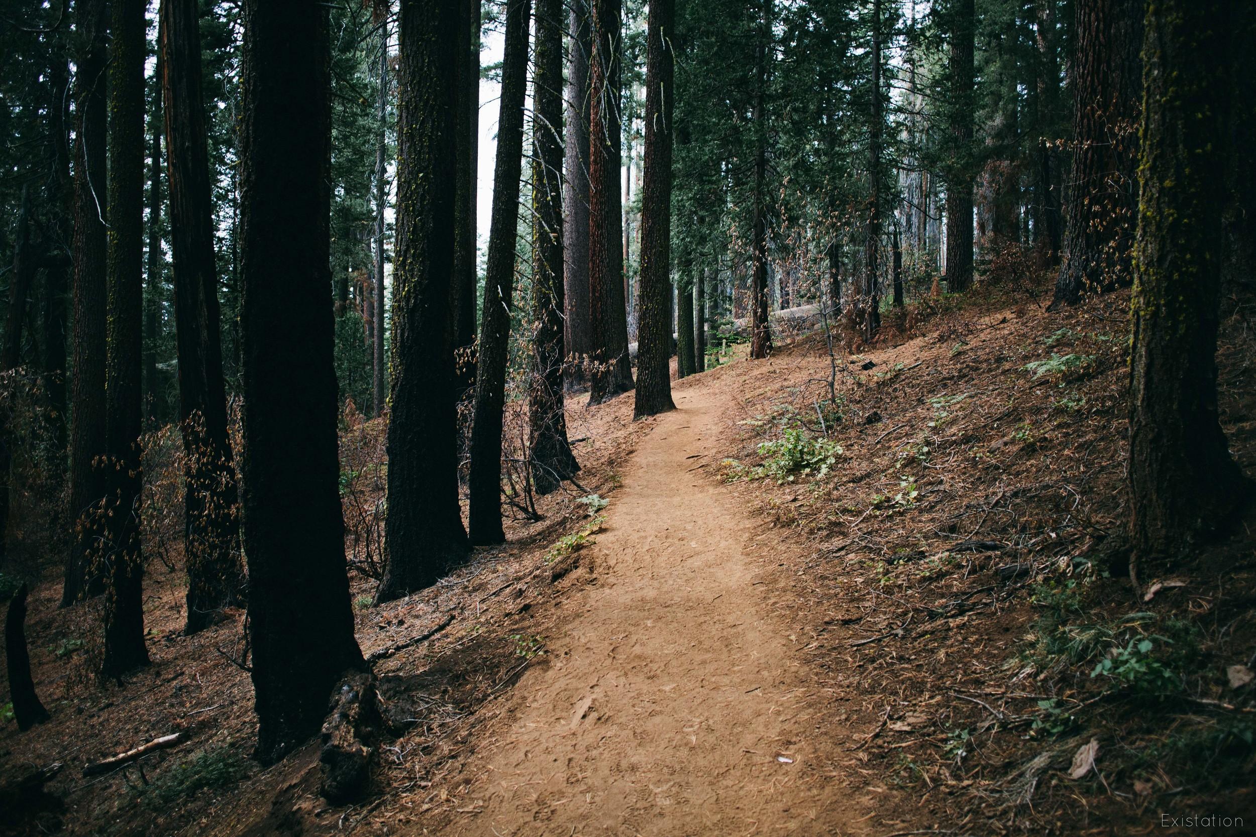 tuolumne grove sequoias yosemite