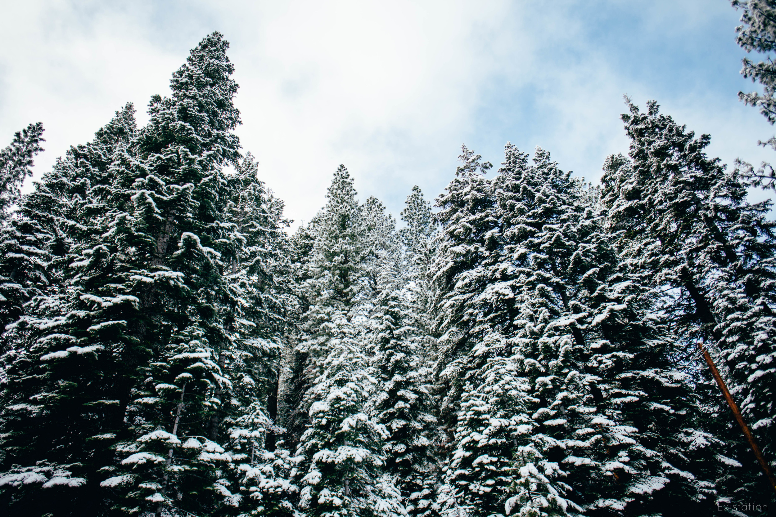truckee snow trees