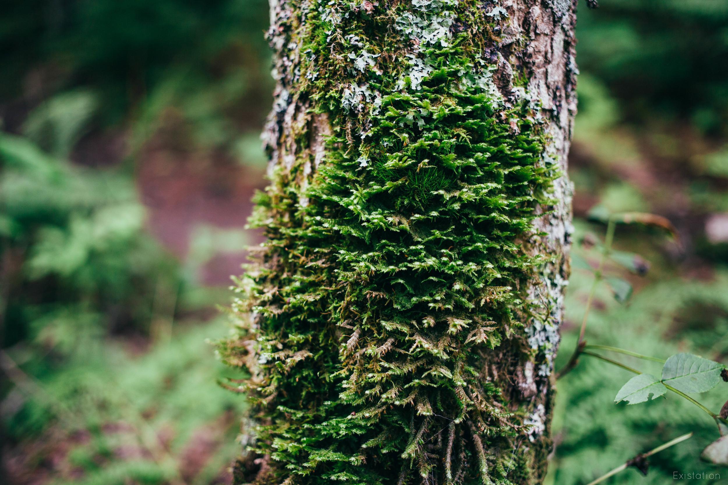 moss gooseberry.jpg