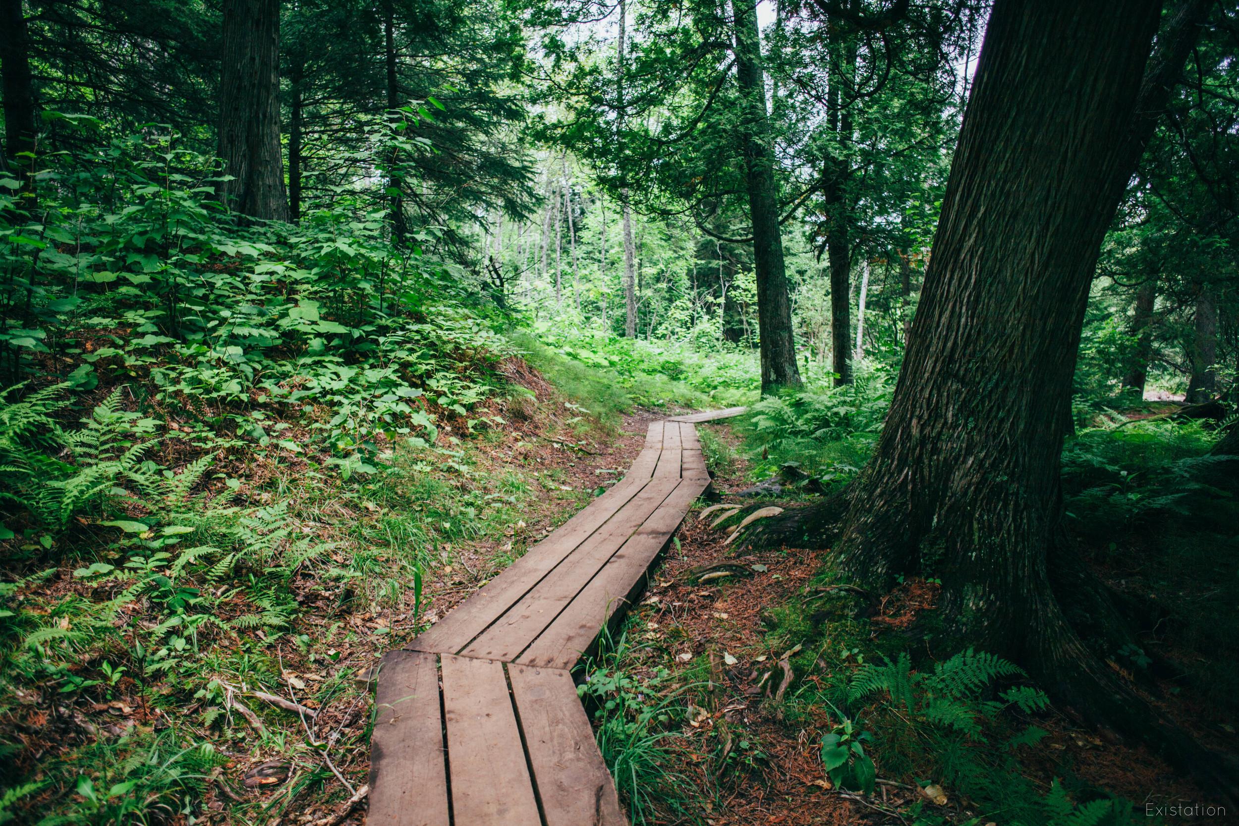wooden hiking path gooseberry.jpg
