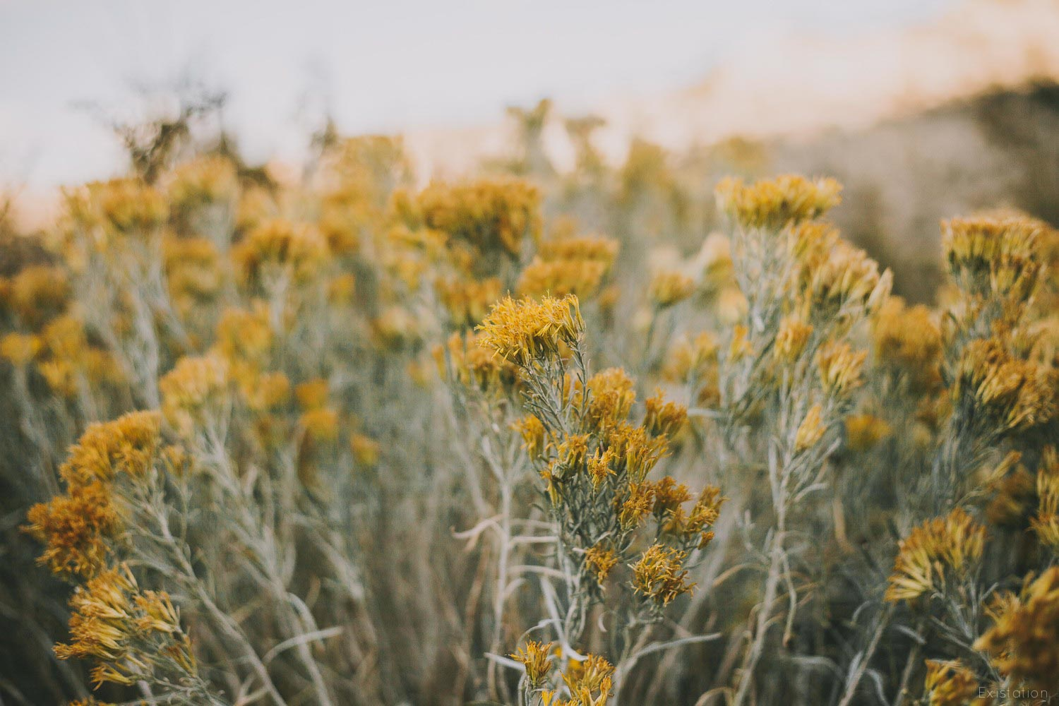 yellow+wildflowers.jpg
