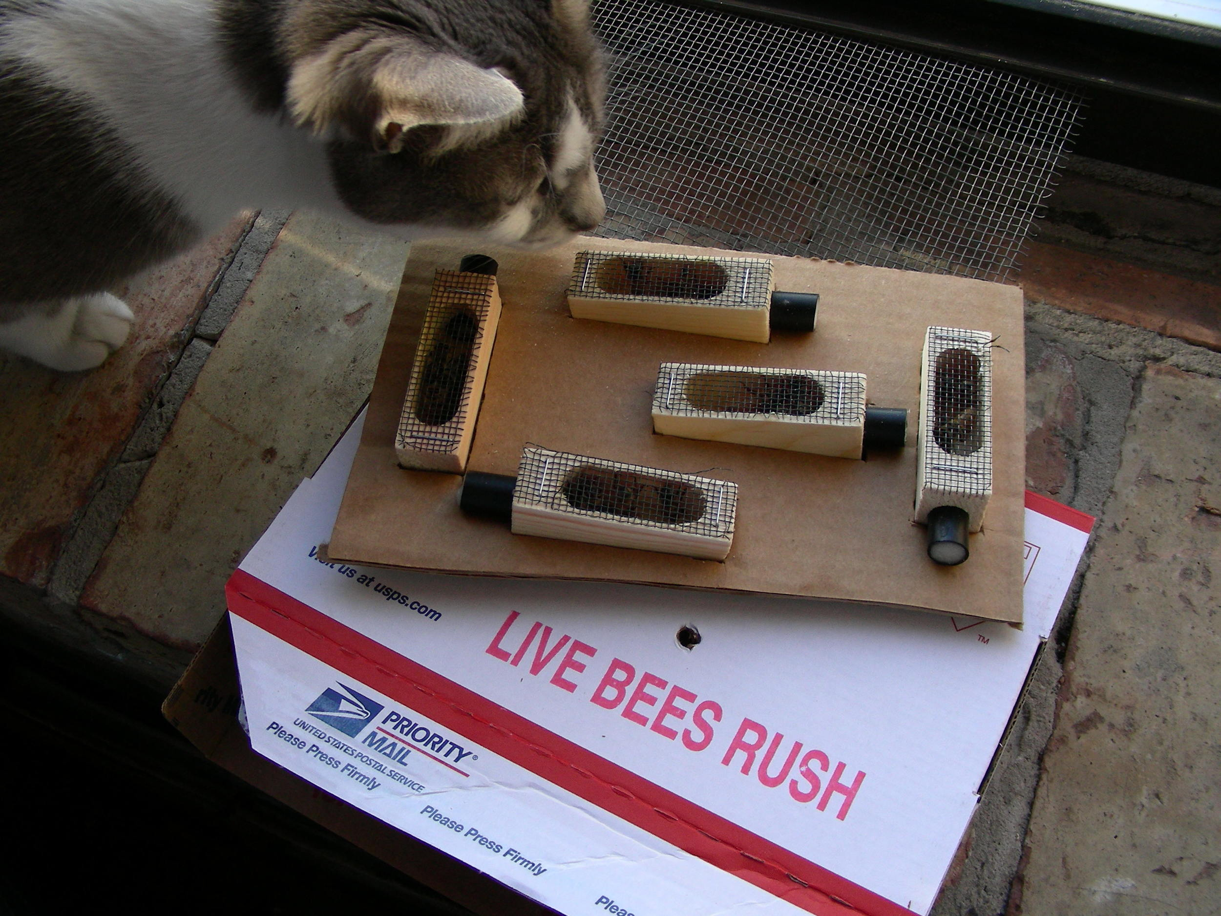 Live Bees Attract Attention