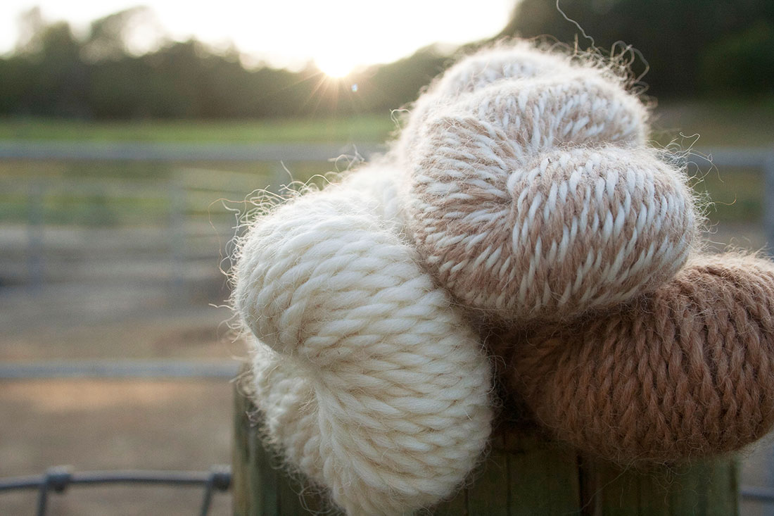 Image from recent Fibershed Blog post by Dustin Kahn