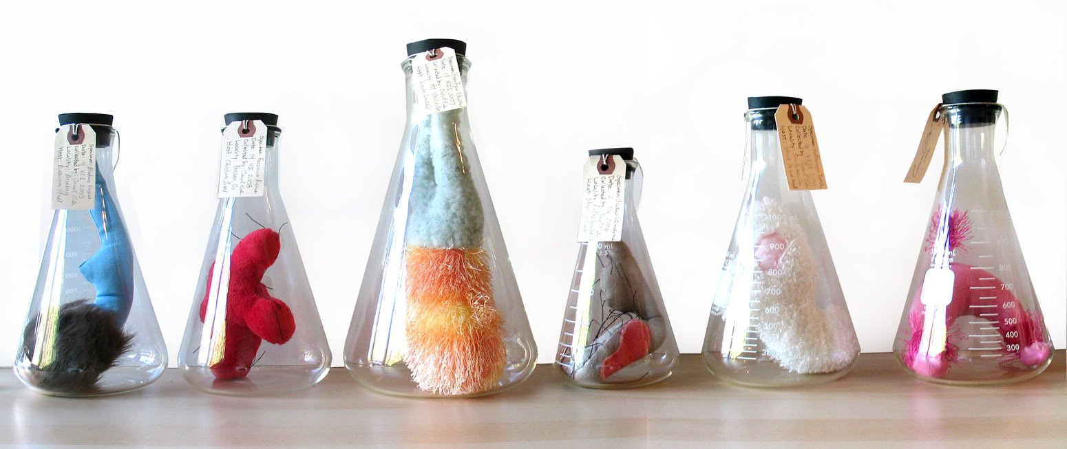 "Six Specimens, 2012     Hand sewn ""specimens"" inside glass Erlenmeyer flasks, various sizes to 12 inches high:"
