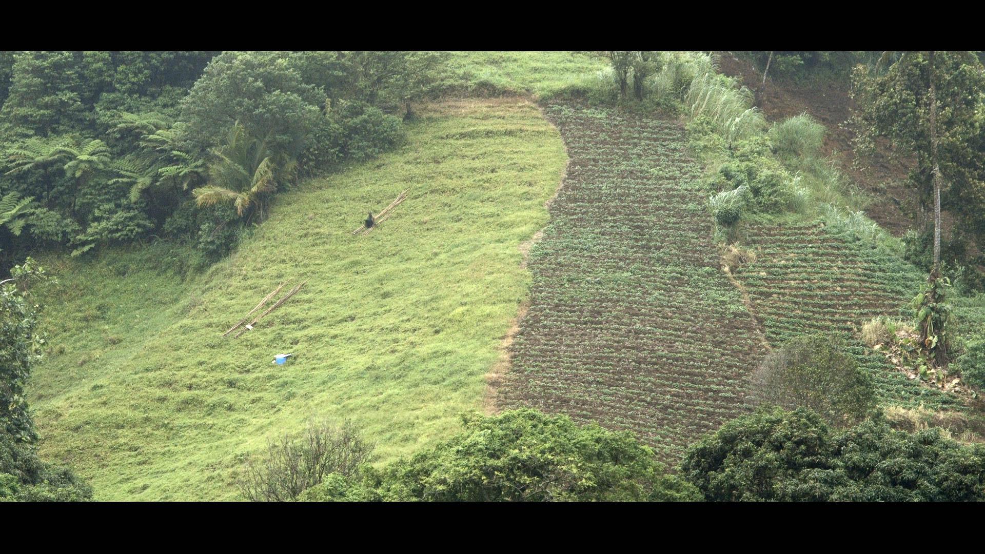 Terraced Farming - Mesopotamia Valley, St Vincent - Video Still