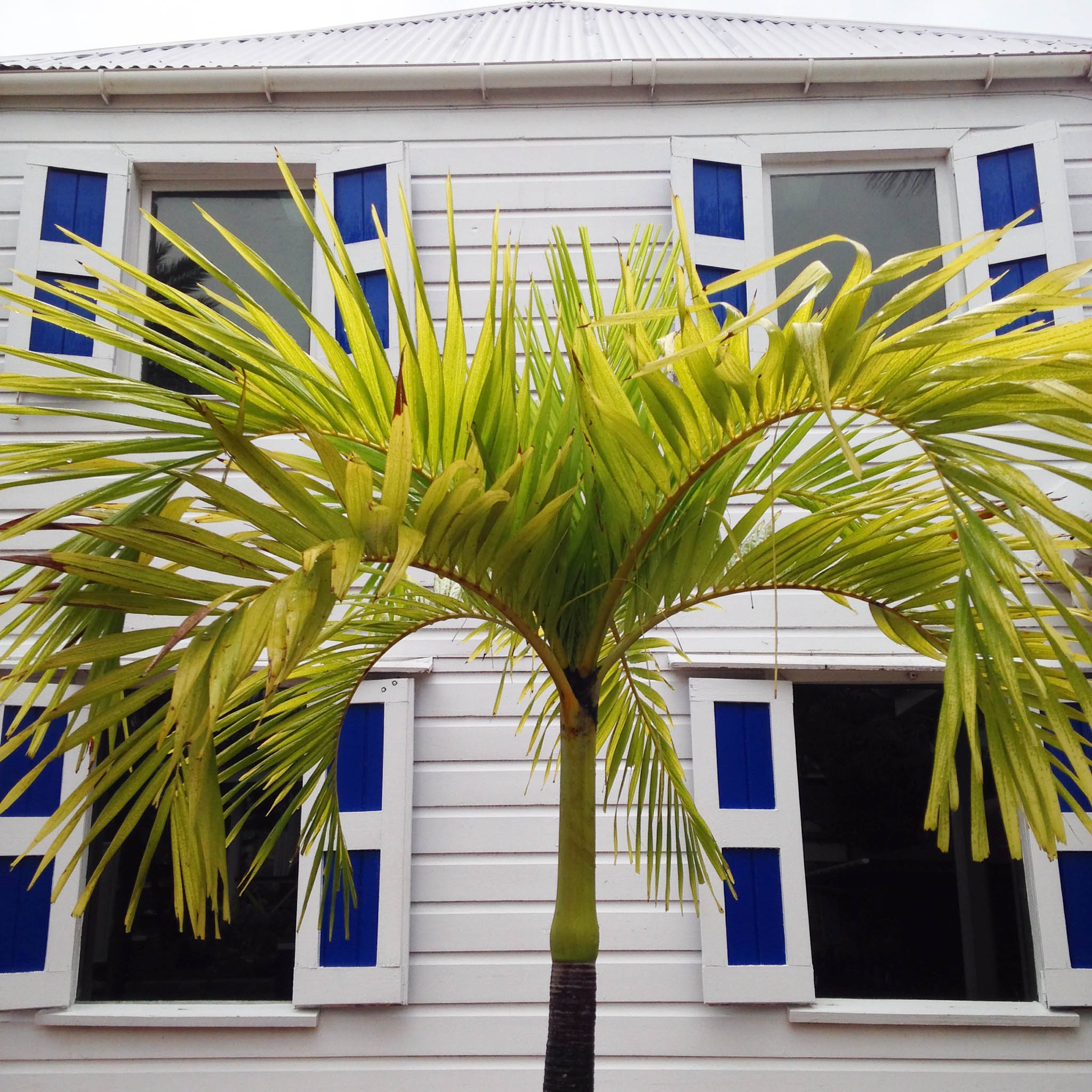 Palm Windows