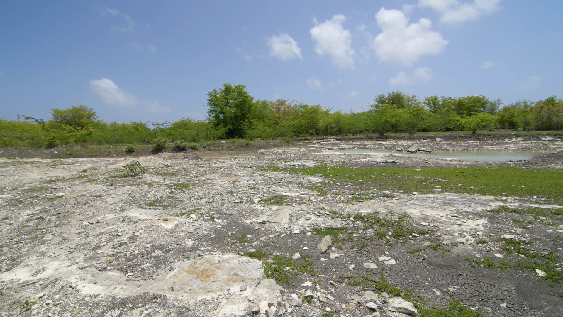Empty Pond, Barbuda - Video Still, Tom Miller