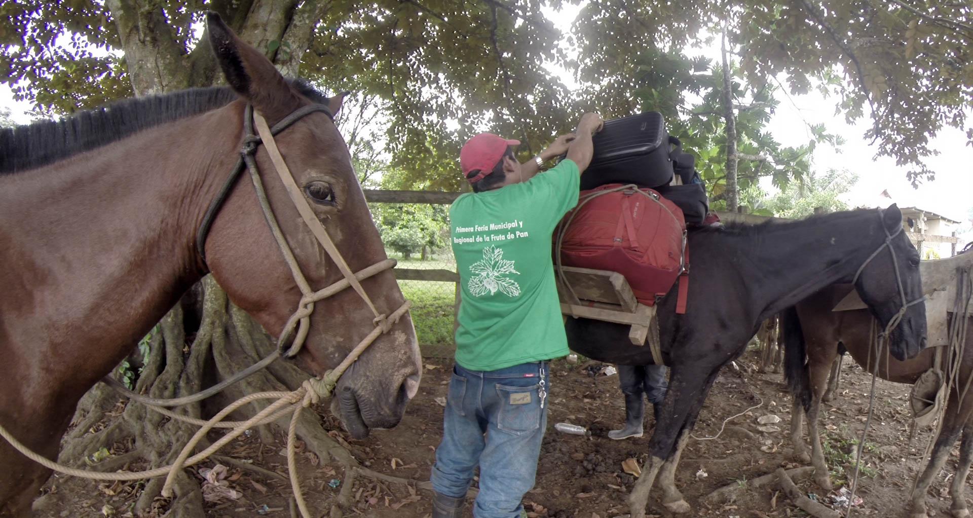 Skeptical Donkey, Pueblo Nuevo - video still, Tom