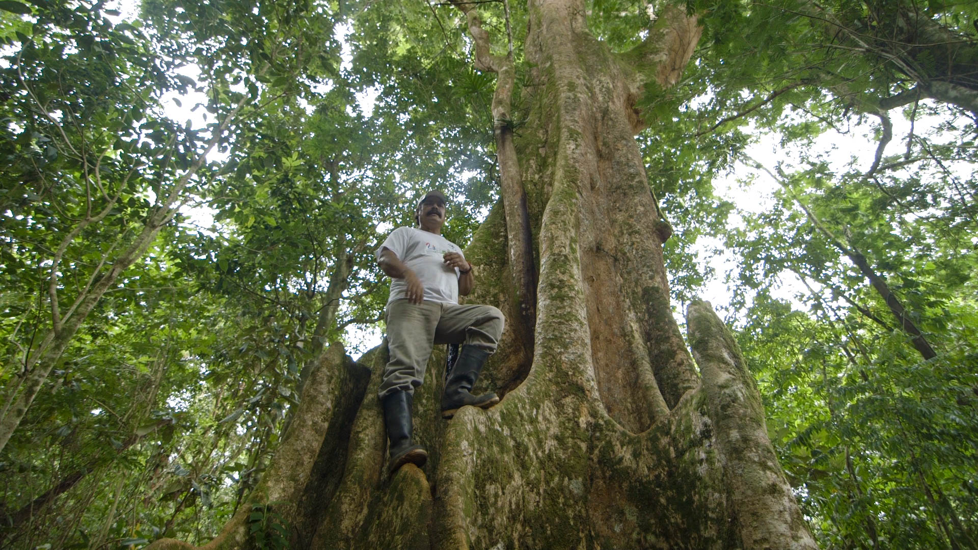 Tito, Singing in an Ebo tree - video still, Tom