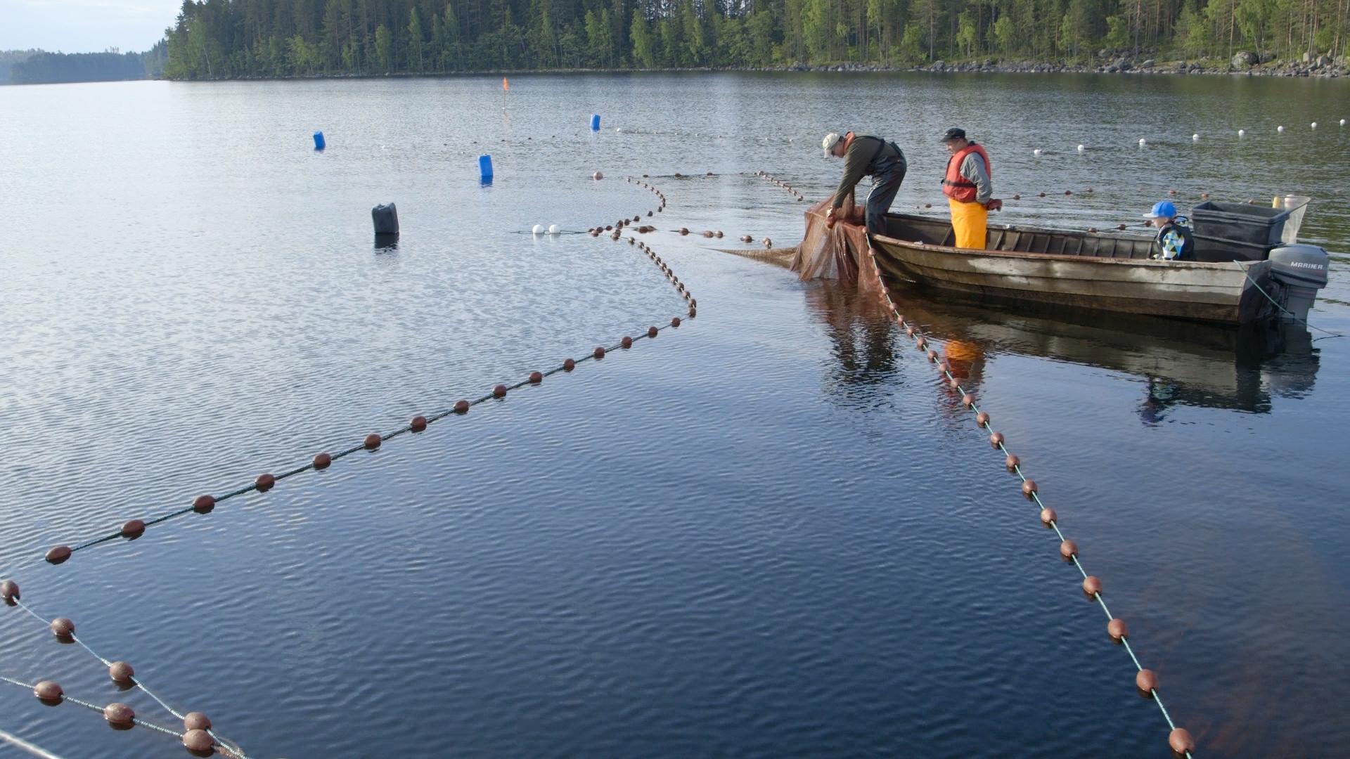Seining on Lake Puruvesi