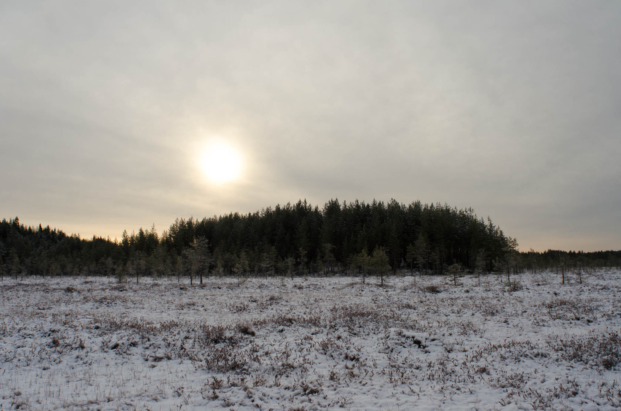 Vehkasuo, Winter