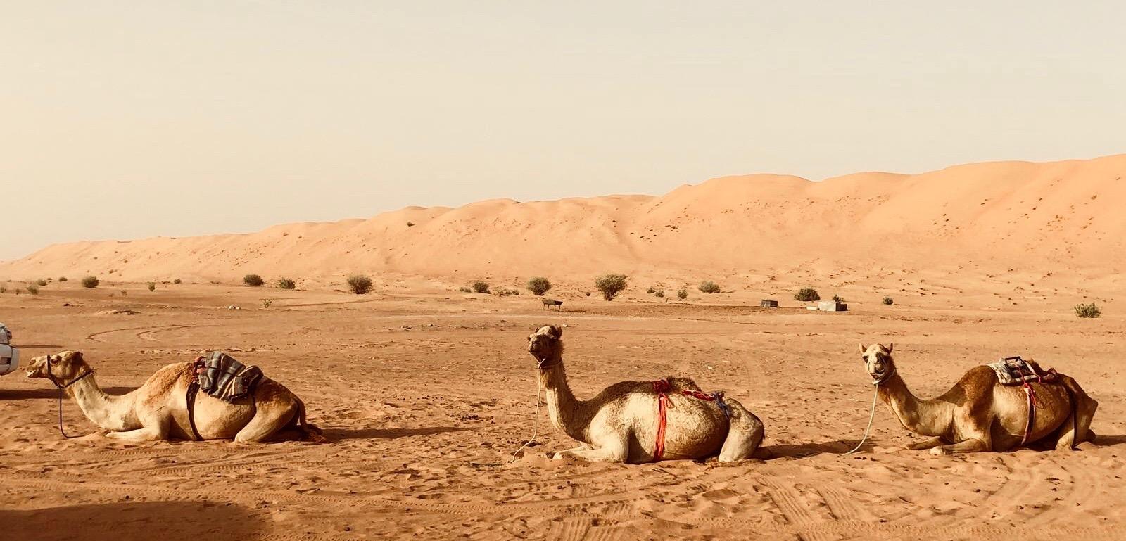 Glamorous Living - A Desert Vacation - Doreen Chambers Interiors - Brooklyn -  New York - South Florida