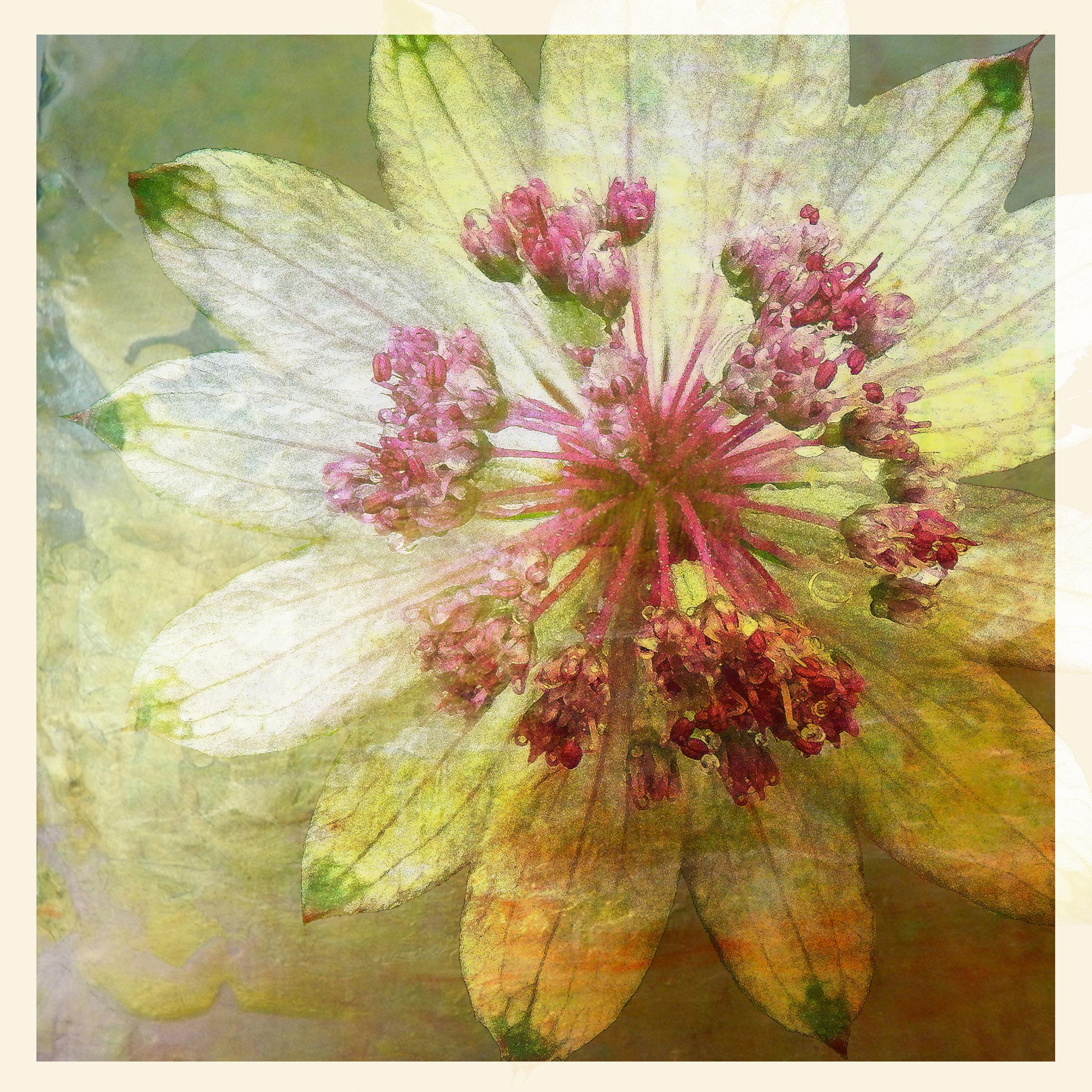small petals.jpg