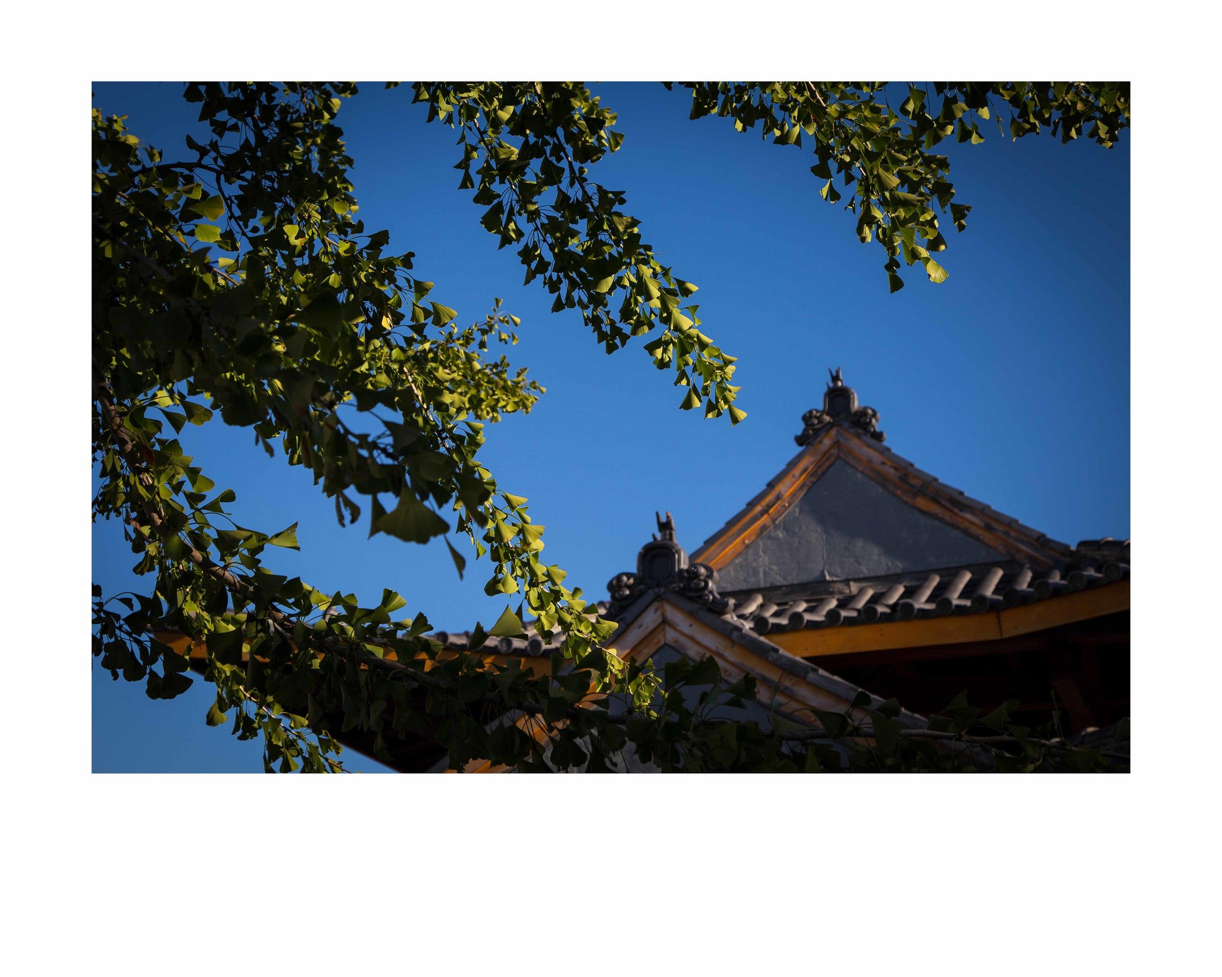 Ping Tom Pagoda.16x20 framed. $150
