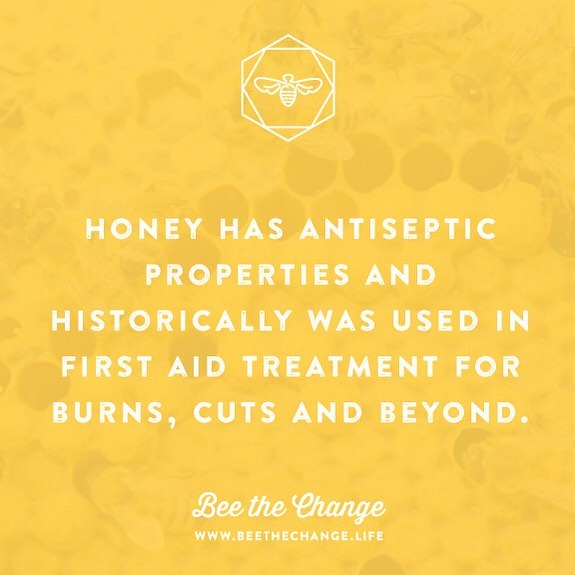 Did you know that honey has antiseptic properties and historically was used as a first aid treatment for dressing wounds, burns and cuts? 🍯✨The amazing healing properties of honey are due to its antibacterial activity—it also maintains a moist wound condition, and its high viscosity helps to provide a protective barrier to prevent infection. Its immunomodulatory property is relevant to wound repair as well. ⁣⁣ Honey and the bees that produce it are truly incredible and imperative to our natural world and global ecosystem. We must do our part to protect these creatures and their natural habitat! Join us in the movement to #beethechange —abstain from all pesticide use and plant native wildflower seeds wherever you see a spare patch of land or dirt! The pollinators and natural environment will thank you! 🍯🐝🌿🌻✨