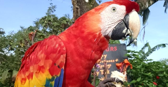 Feeding the macaw.