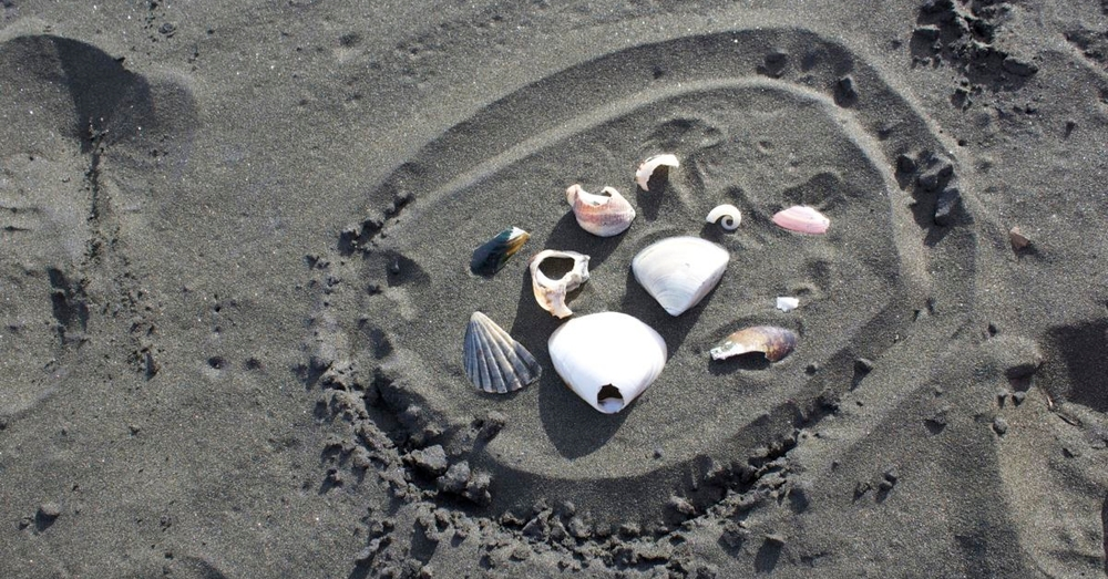 Jackie's curated shells.