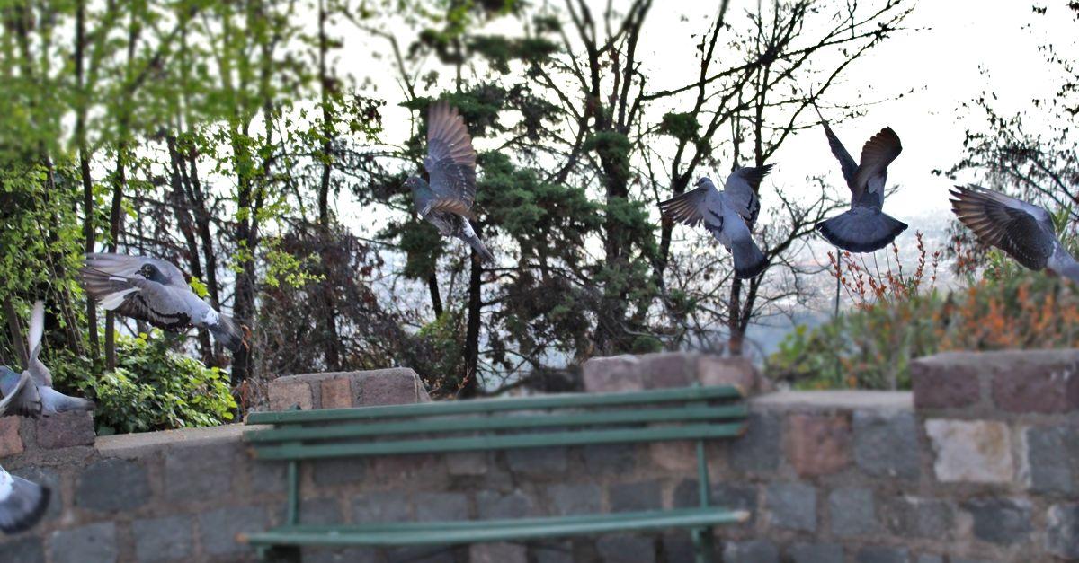 Pigeons on Cerro San Cristóbal