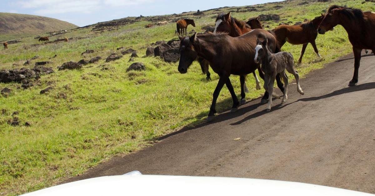 Beware of Horses
