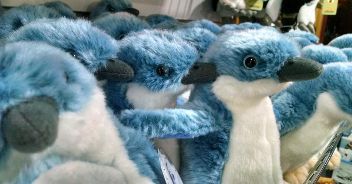 31-8-blue-penguins.jpg
