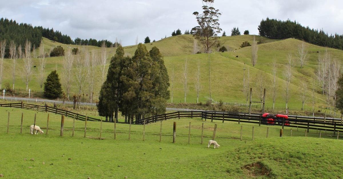 NZ033.jpg