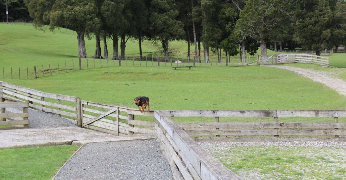 NZ041.jpg
