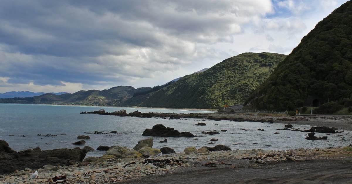 NZ127.jpg
