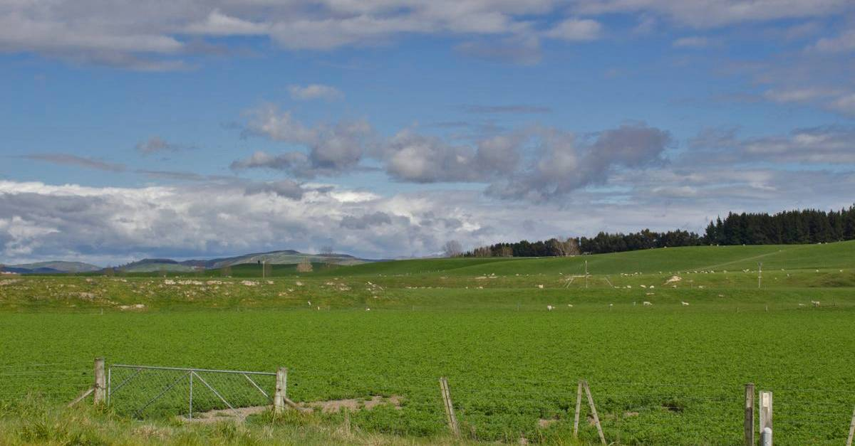 NZ138.jpg