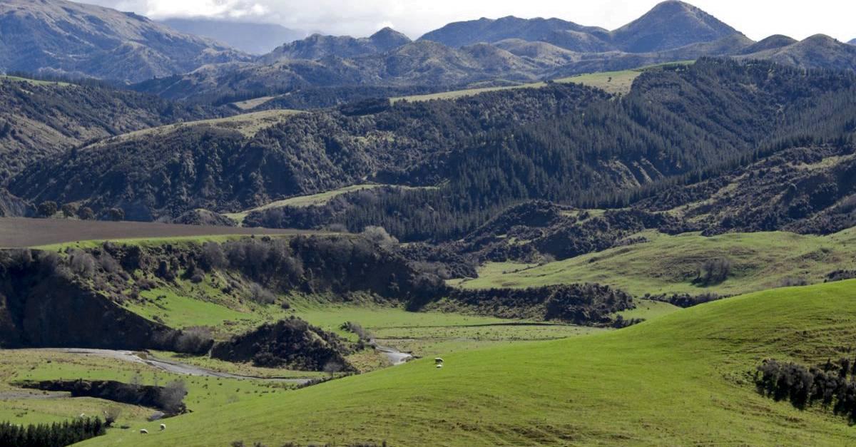 NZ141.jpg