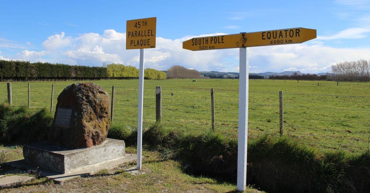 NZ162.jpg