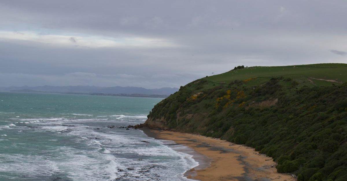 NZ171.jpg