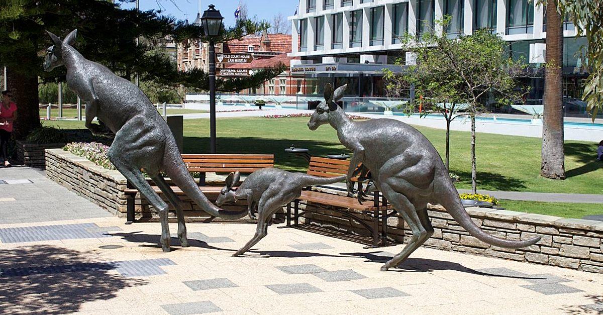 Kangaroos on the Terrace