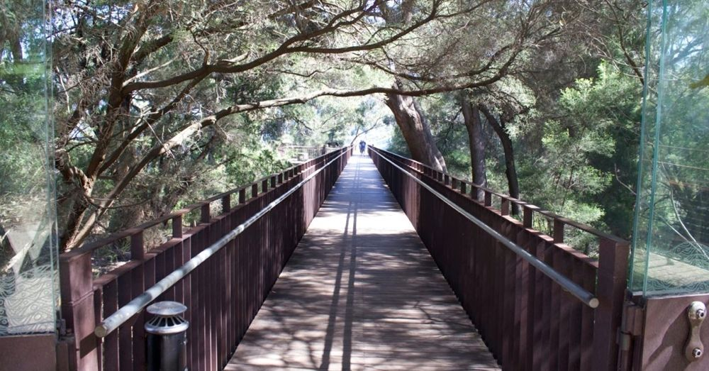 Entrance to the Tree Top Walkway