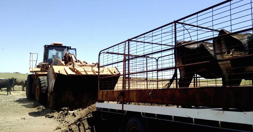 Heavy duty farming.