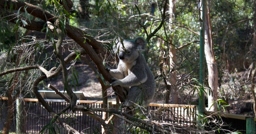 Perth Zoo: Slater