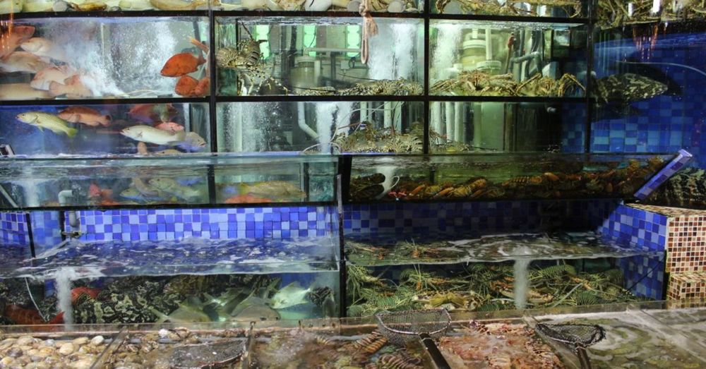 Seafood in Sai Kung