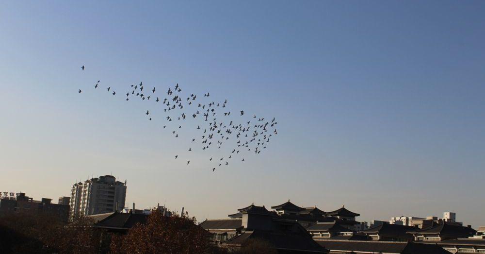 Birds of Xi'an