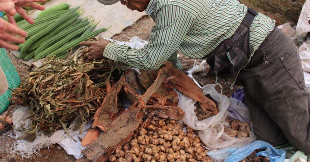 Pitcher Plant Vendor