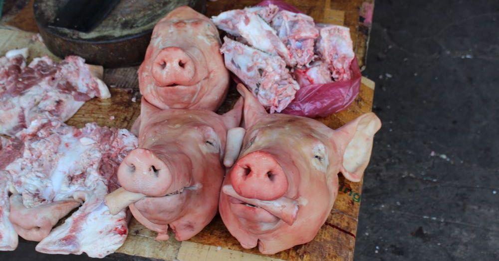 Pigs at Market, Siem Reap