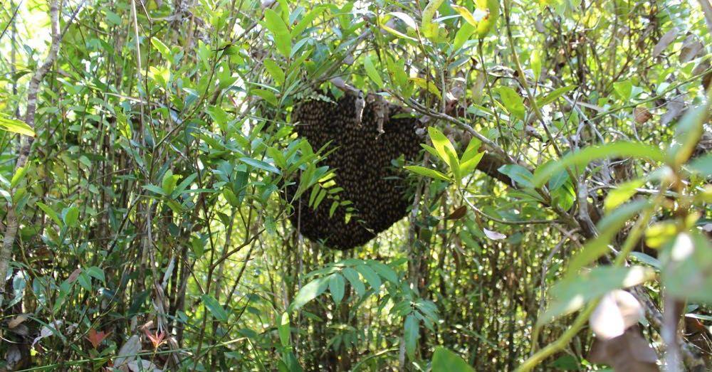 Giant Honeybee Hive