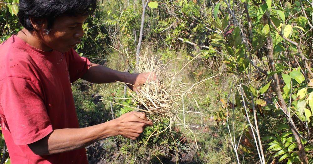 Traditional Cambodian Beekeeping Smoker