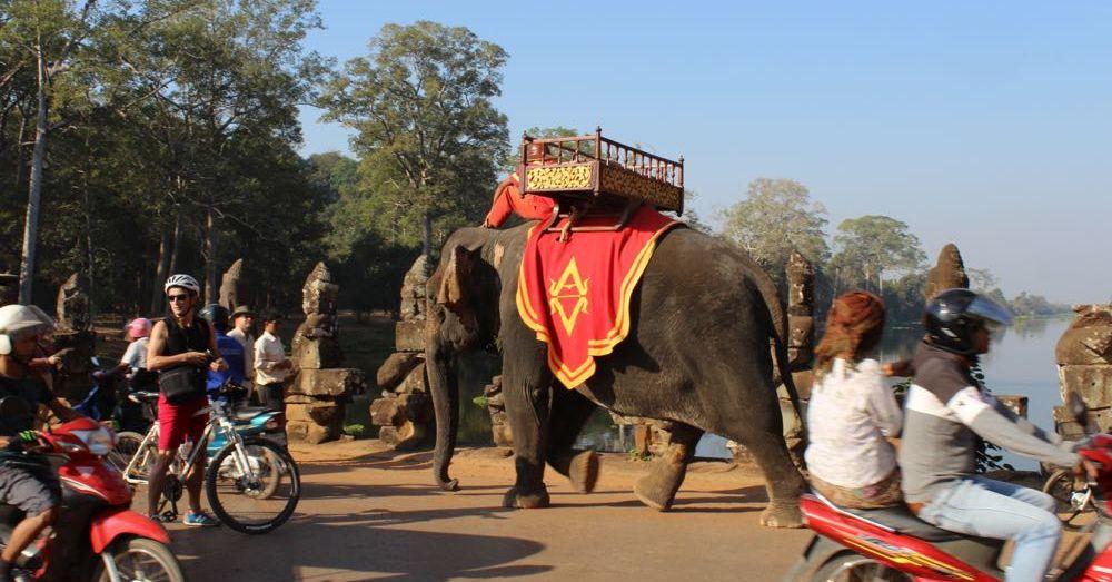 Elephant on the bridge.
